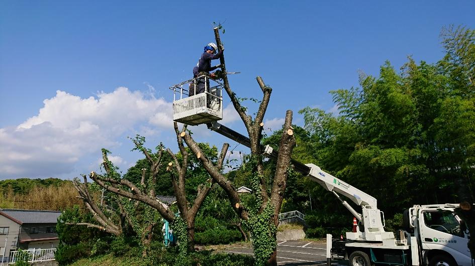 樹木伐採工事